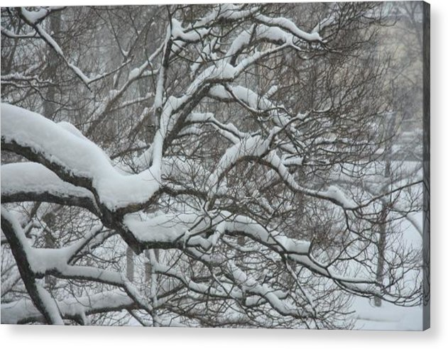 Djurgarden Acrylic Print featuring the photograph Swedish Winter by Kyra Munk Matustik