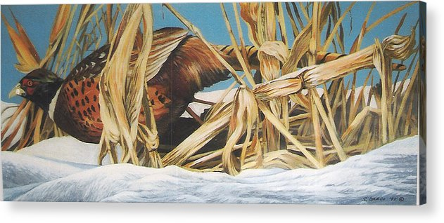 Wildlife Acrylic Print featuring the painting Layin' Low by Steve Greco