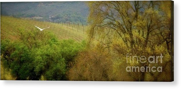 Paso Robles Acrylic Print featuring the photograph A Scene From Paso by Lori Leigh