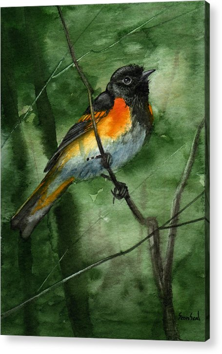 Birds Acrylic Print featuring the painting American Redstart by Sean Seal