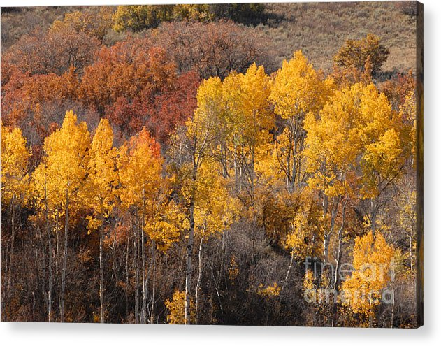 Autumn Acrylic Print featuring the photograph Autumn Patchwork by Dennis Hammer