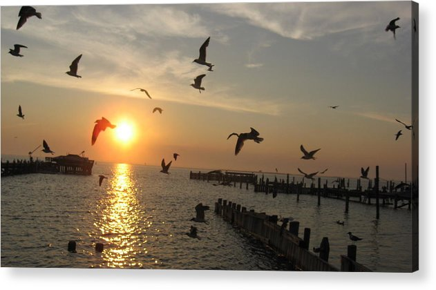 Seagulls Acrylic Print featuring the photograph Barneget Sunset by Colleen DalCanton