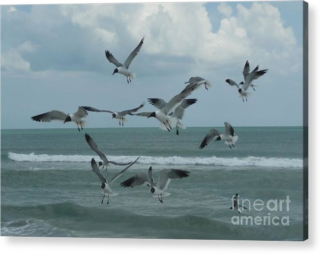 Birds Acrylic Print featuring the photograph Birds In Flight by Barb Montanye Meseroll