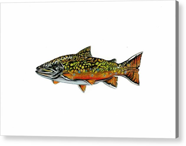 Fish Acrylic Print featuring the mixed media Brook Trout by Jim Romeo