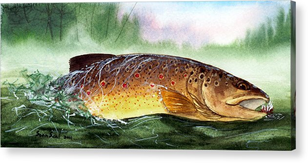 Trout Acrylic Print featuring the painting Brown Trout Taking A Fly by Sean Seal