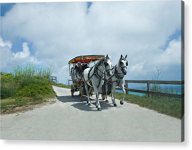 Bermuda Acrylic Print featuring the photograph Carriage Ride by Lori Goodwin