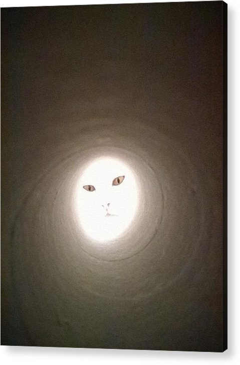 Cat Acrylic Print featuring the painting Light by Alia Bastet