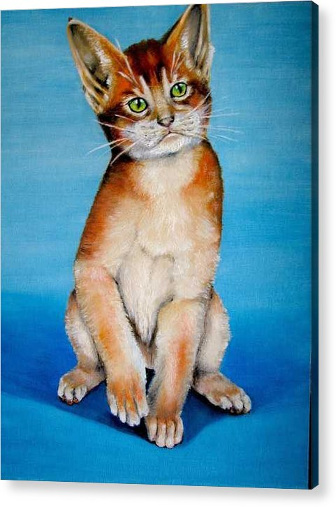 Cat Acrylic Print featuring the painting Cat Original Oil Painting by Natalja Picugina