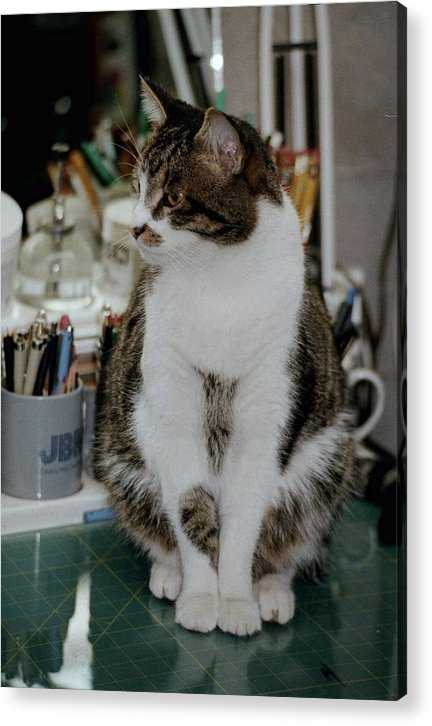 Cat Acrylic Print featuring the photograph Clyde At The Desk by Tom Herrin