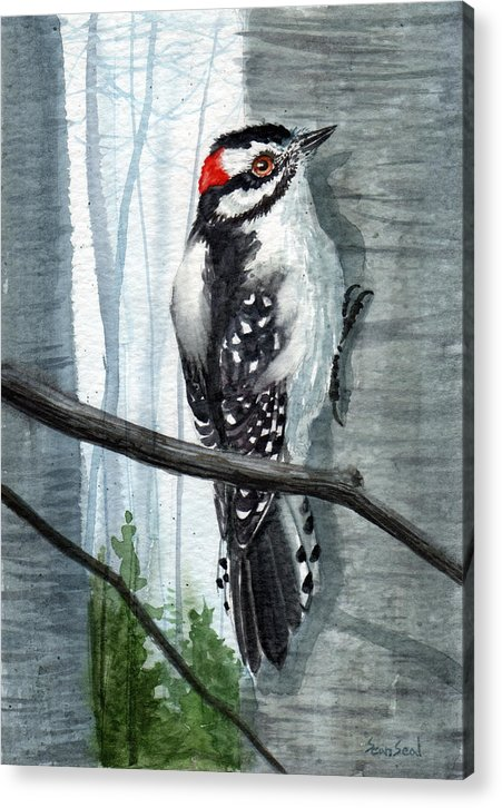 Birds Acrylic Print featuring the painting Downey Woodpecker by Sean Seal