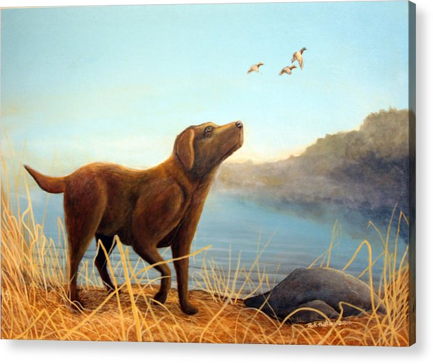 Chocolate Lab Painting Acrylic Print featuring the Dutch by Rick Huotari