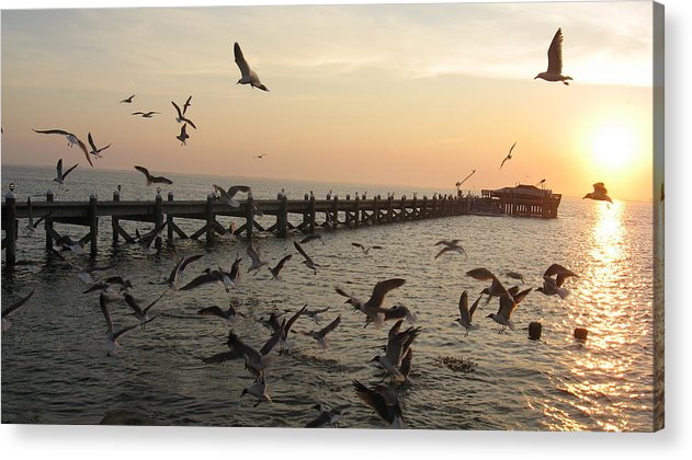 Sunset Acrylic Print featuring the photograph Feeding Time by Colleen DalCanton
