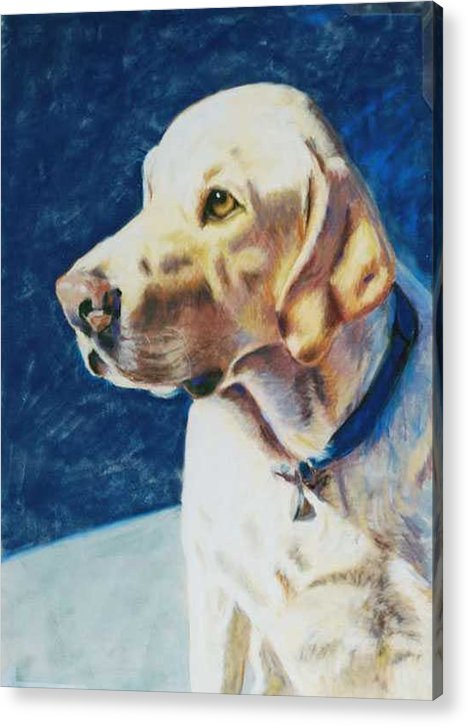 Yellow Lab Acrylic Print featuring the painting Focused by Billie Colson