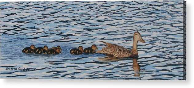Ducks Acrylic Print featuring the painting Follow The Leader by Sharon Farber