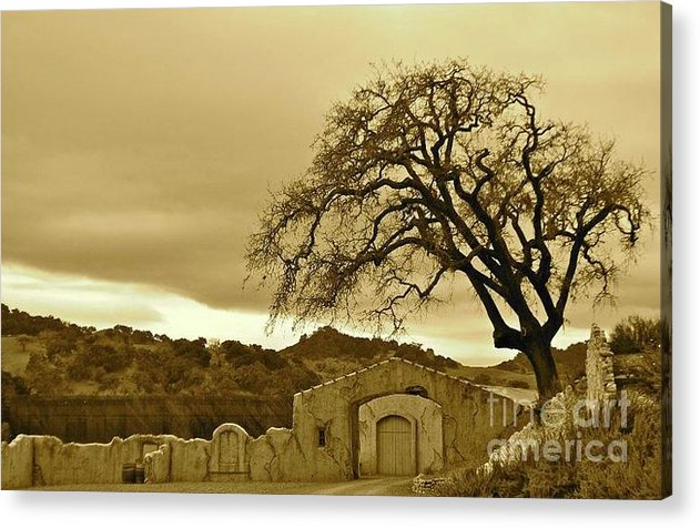 Tree Acrylic Print featuring the photograph In A Dream by Lori Leigh