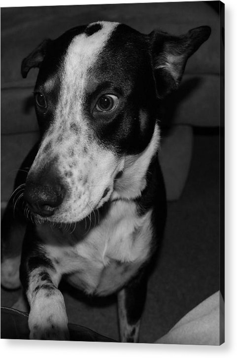 Black And White Acrylic Print featuring the photograph Jimmy by Rob Hans