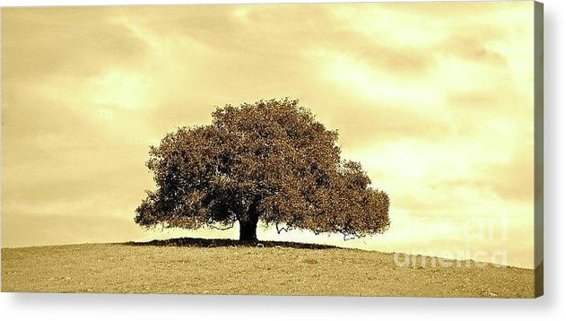 Tree Acrylic Print featuring the photograph Lone Tree by Lori Leigh
