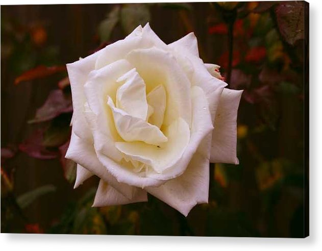 Photography Acrylic Print featuring the photograph Mature by Ofelia Arreola