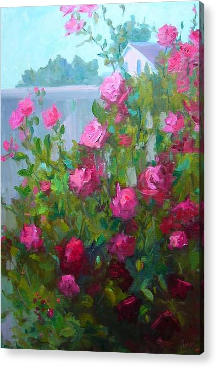 Climing Red Roses On Fence Acrylic Print featuring the painting MyBack Yard Roses by Patricia Kness