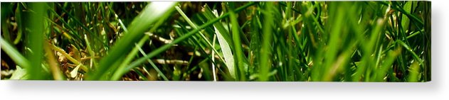 Grass Acrylic Print featuring the photograph Pei Grass - Bottom by John Julio