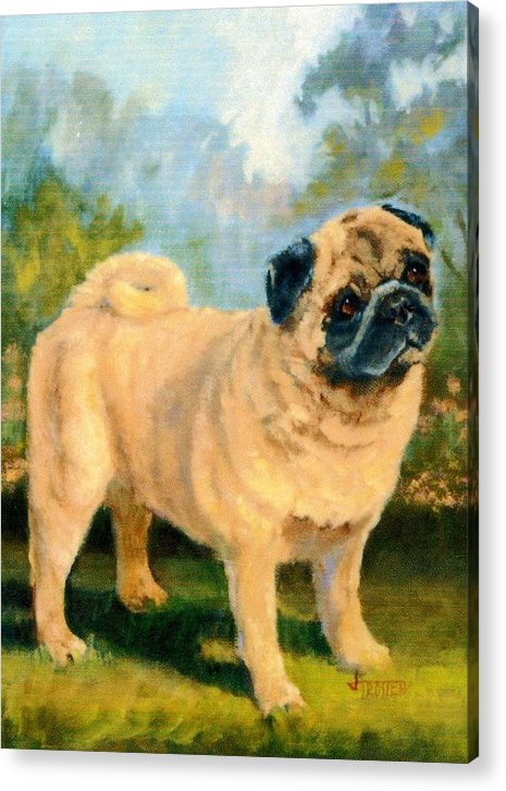 Animal Acrylic Print featuring the painting Pug In The Park by Jimmie Trotter