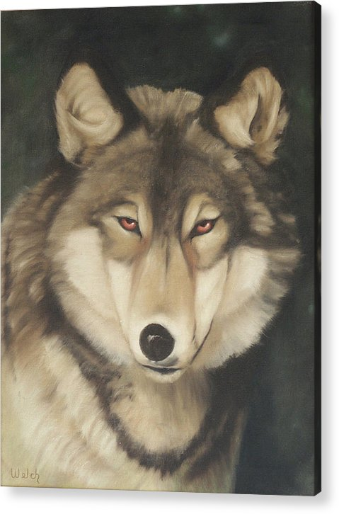 Wolf Acrylic Print featuring the painting Red Eyes by Steven Welch