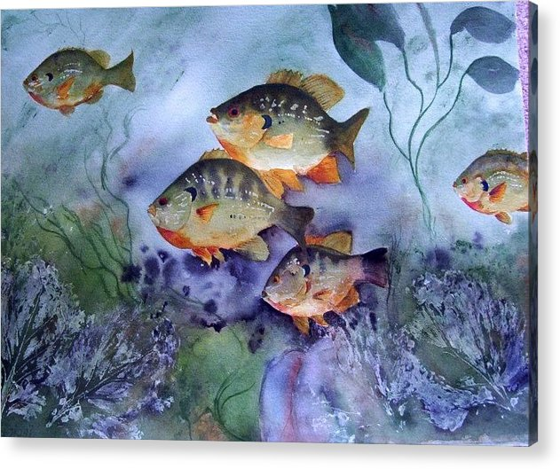 Original Acrylic Print featuring the painting School's Out - Bluegills by Audrey Bunchkowski
