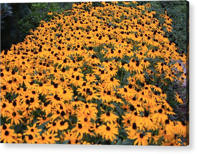 Sunny Acrylic Print featuring the photograph Sunny Side Up by Kristina Randal