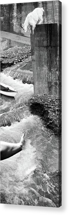 Goat Acrylic Print featuring the photograph Take A Dip by Justin Kasubick