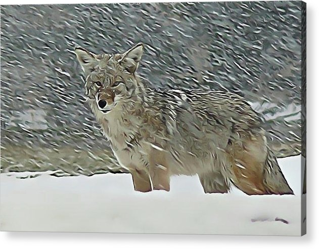 Animals Acrylic Print featuring the painting The Coyote by Errol Savage