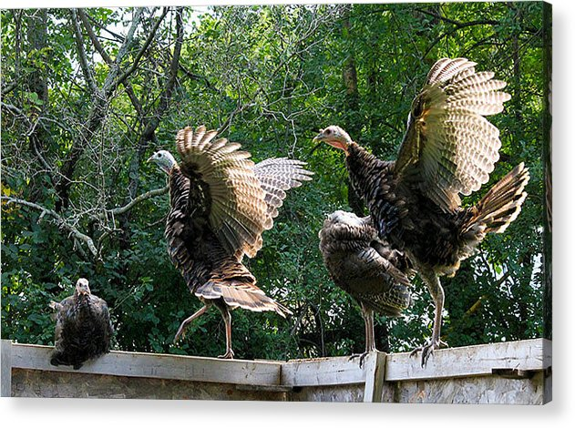 Turkey Acrylic Print featuring the photograph Turkey Dance by Tammy Grubbs