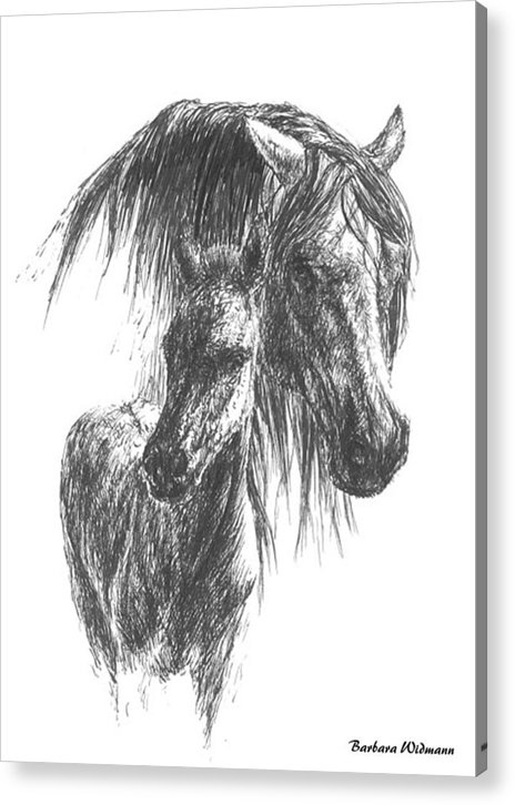 Horses Acrylic Print featuring the drawing Wild by Barbara Widmann