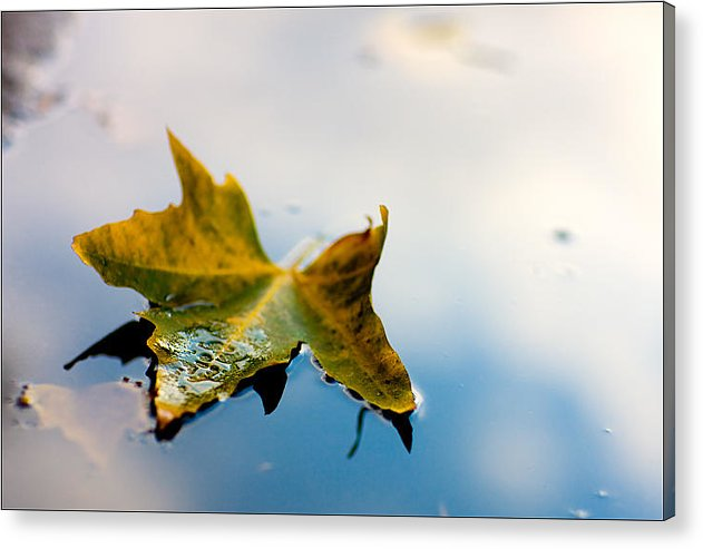 Leaf Acrylic Print featuring the photograph Yellow Plus Blue Equals Edge by Janell Anderson