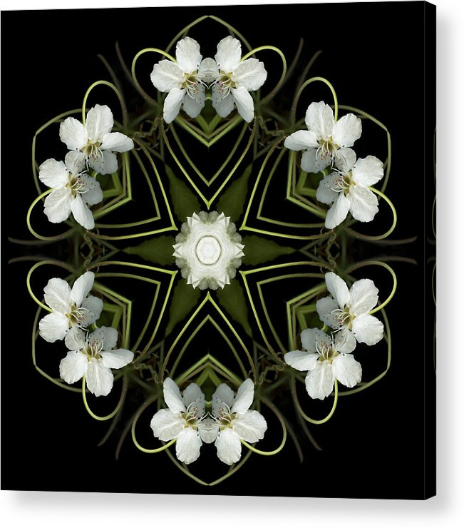 Mandala; Floral; Botanical; Scanner Photography; Scanography; Pear Blossoms; White; Leaves; Acrylic Print featuring the photograph Hearts And Flowers by Marsha Tudor