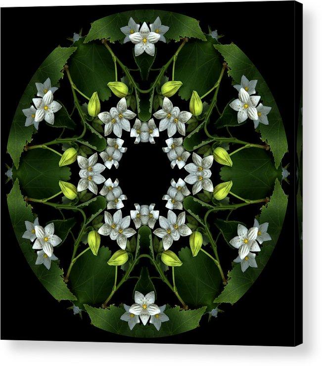 Mandala; Floral; Botanical; Scanner Photography; Scanography; Abutilon; White; Yellow; Leaves; Acrylic Print featuring the photograph Ojai Abutilon by Marsha Tudor