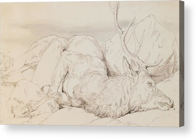 C19th Acrylic Print featuring the drawing A Dead Stag by Sir Edwin Landseer