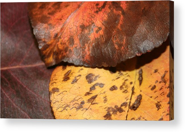 Leaf Acrylic Print featuring the photograph Fallen Leaves by Rob Cruise