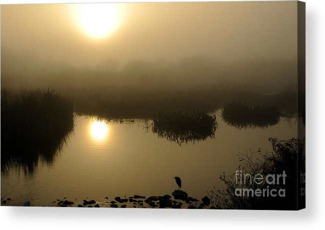 Marsh Acrylic Print featuring the photograph Misty Morning In The Marsh by Nancy Greenland