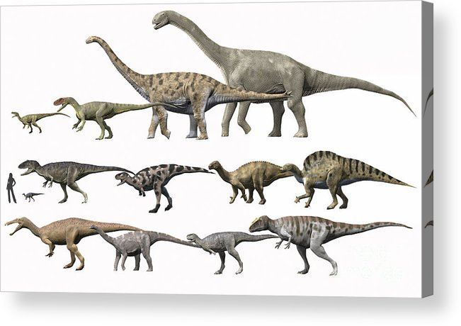 Comparison Acrylic Print featuring the digital art Prehistoric Era Dinosaurs Of Niger by Nobumichi Tamura
