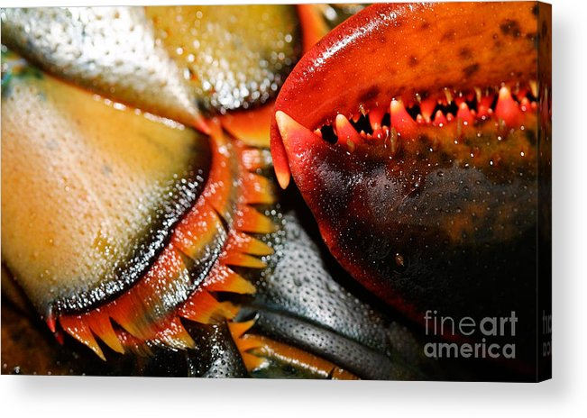 Seafood Acrylic Print featuring the photograph American Lobsters by Matt Suess