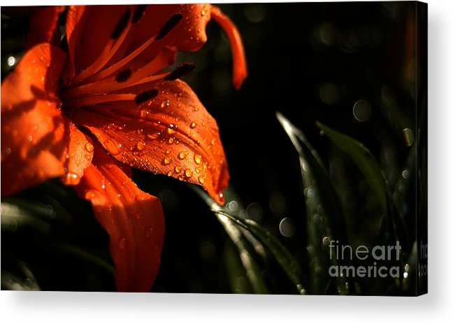 Orange Flower Water Drops Fresh Rain Sun Bright Light Shiny Lily Acrylic Print featuring the photograph Droplets On Flower by Vilas Malankar