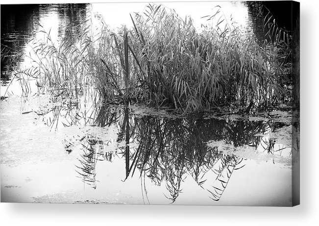Pond Acrylic Print featuring the photograph Zen Pond by David Resnikoff
