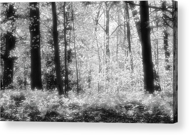 Abstract Acrylic Print featuring the photograph Along The Top Bw by Lyle Crump