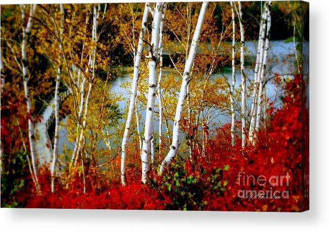 Autumn Acrylic Print featuring the photograph Autumn Birch Lake View by Patricia L Davidson