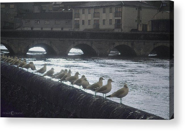 Birds Acrylic Print featuring the photograph Line Of Birds by Tim Nyberg