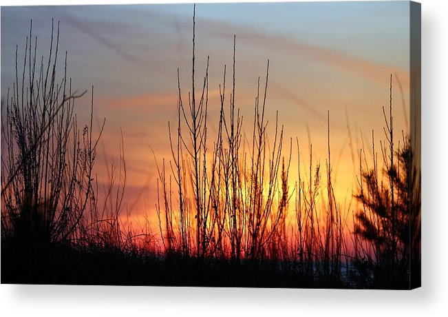 Grand Bend Acrylic Print featuring the photograph Through The Brush by John Scatcherd
