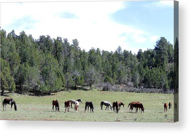 Utah Acrylic Print featuring the photograph Utah 10 by Will Borden
