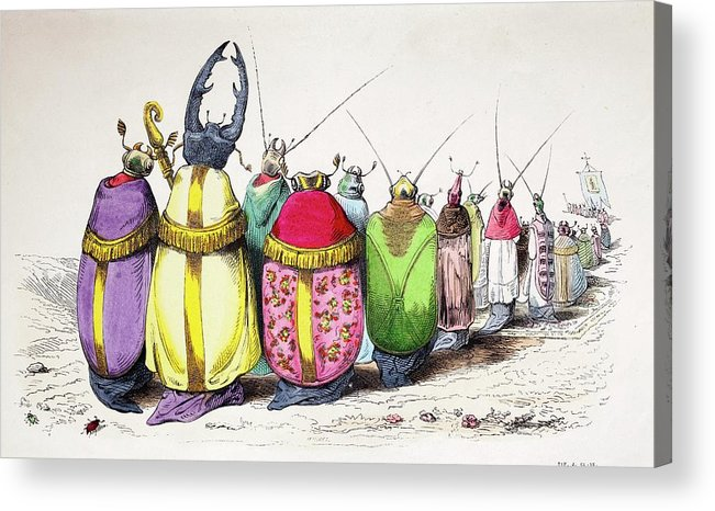 Animaux Acrylic Print featuring the photograph 1842 Caricature Coloured Church Beetles by Paul D Stewart