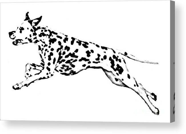 Dogs Acrylic Print featuring the drawing Celebrate by Jacki McGovern