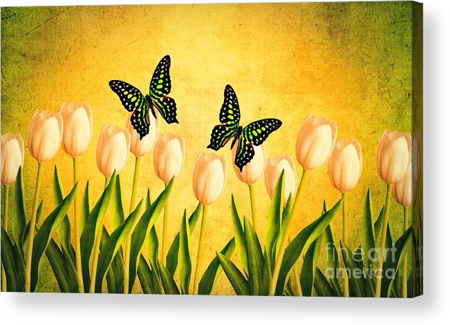Edward Acrylic Print featuring the photograph In The Butterfly Garden by Edward Fielding